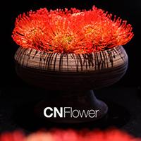 CNflower